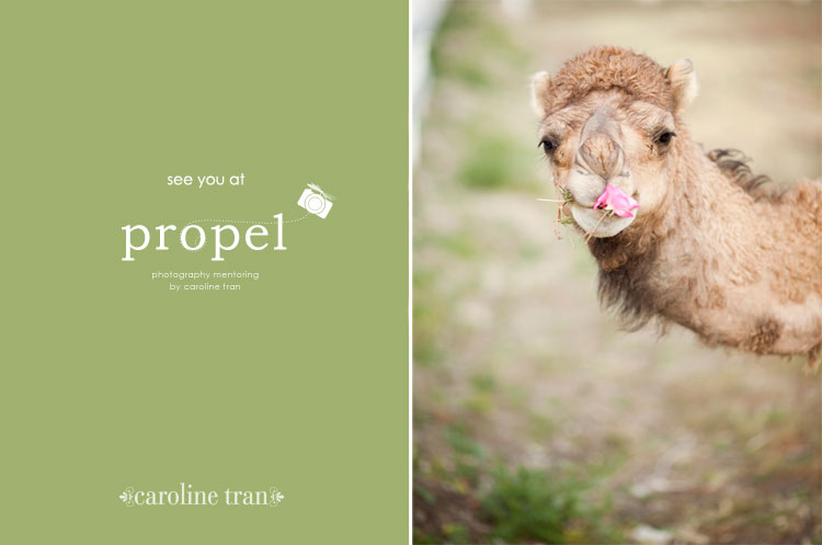 camel welcoming you to propel
